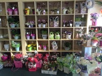Garden City Florist in Letchworth Garden City Hertfordshire SG6 3BY